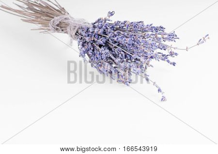 a Bundle of lavander on white background isolate