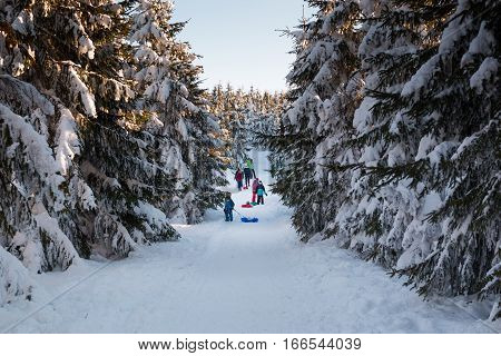JESTED, CZECH REPUBLIC - 21.01.2017: People in winter forest with high spruces and snow in mountains Czech Republic