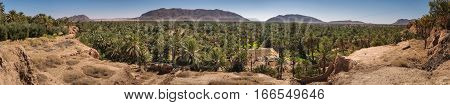 Panoramic view over the oasis of date palms in Figuig in Morocco. In the distance you can see a small mountain that is very close to the Algerian border.