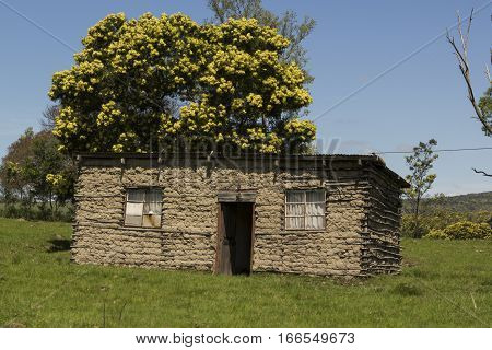 Rural African house with green grass leading up to it and a tree in the background