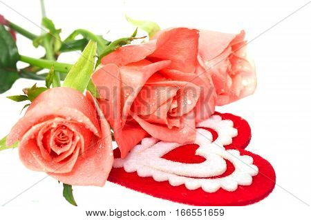 pink roses and heart on white. Roses with water drops heart from red material with an ornament is isolated on white