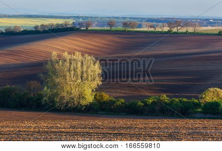 Blooming Trees Against Fields At Sunset In Spring