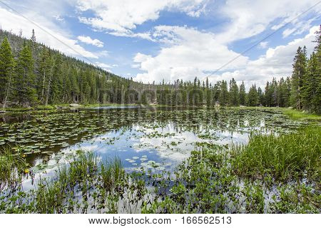 Colorado Mountain Lake with Lily Pads and Blue Sky