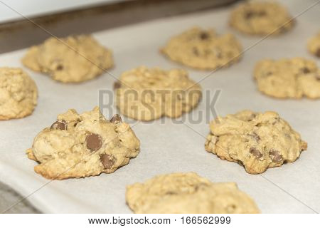 Fresh baked chocolate chip cookies fresh out of the oven on a baking tray
