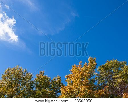 Autumn colored treetops under a deep blue sky background