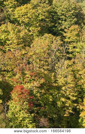 Early Autumn Trees stacked along a steep hillside viewed from above.
