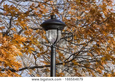 Closeup of ornate black lamp post amidst autumn oak trees with vibrant orange leaves blowing in wind