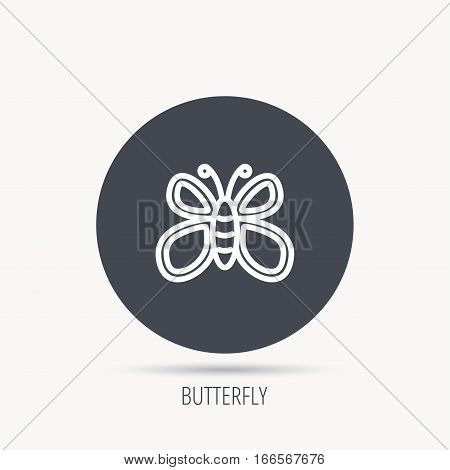 Butterfly icon. Flying lepidoptera sign. Dreaming symbol. Round web button with flat icon. Vector