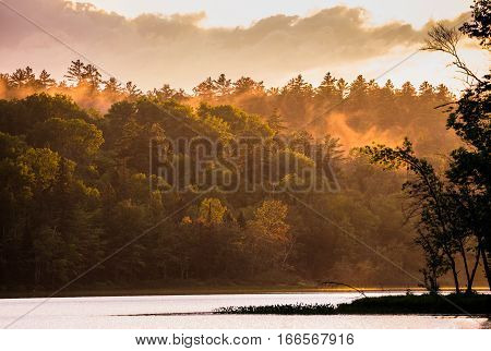Mist rises in a forest along a lake after a heavy thunderstorm passes through the area.  Late afternoon sun breaks through under clouds & creates dramatic orange color in an  Ontario, lakeside forest.