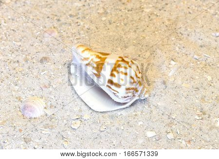 Closeup of spiral shell on warm tropical beach vacation desitination