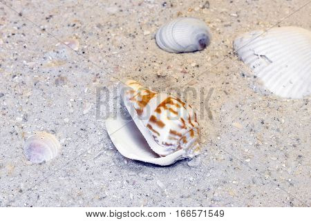 Three clam shells and spiral shell resting on a warm beach tropical destination