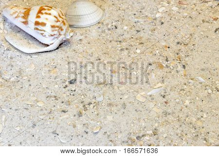 Two tropical shells in top left corner of sandy beach vacation background