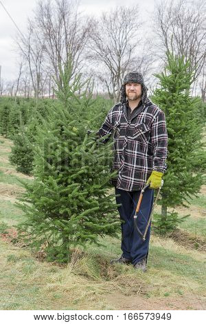 Rugged outdoorsman dad with saw about to cut down chosen Christmas tree on tree farm