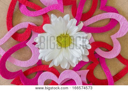 White and yellow spring flower surrounded by a circle of chain felt hearts romantic design