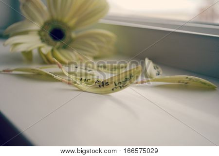 romantic and poetic flower petals on windowsill