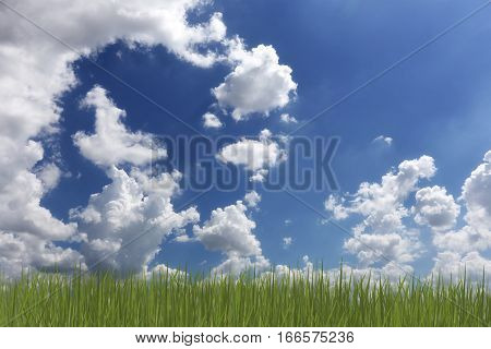 Daytime sky and green grass in the garden.