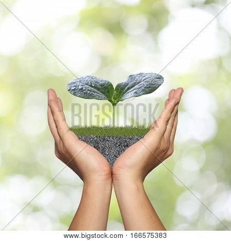 Green seedlings on man hand in concept of growth on nature abstract green bokeh background.