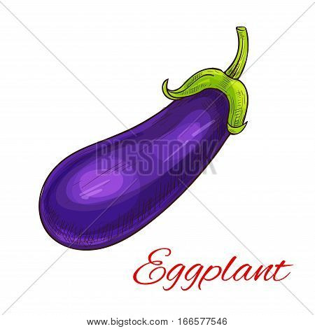 Eggplant vegetable icon. Sketch of farm agriculture vegetable aubergine, brinjal or guinea squash. Vector isolated object for vegetarian and vegan cuisine design, grocery store or farmer market