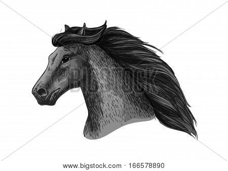 Horse head vector sketch. Wild black raven mustang or mare running or racing. Stallion symbol for equestrian horserace club or equine sport riding bets or exhibition design