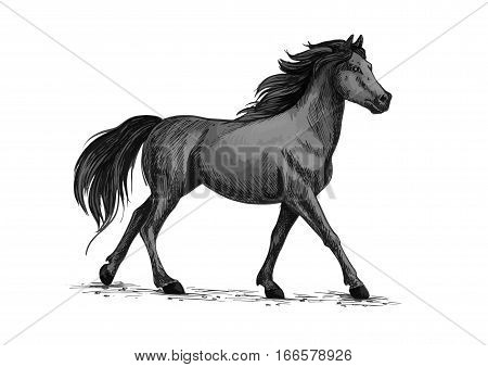 Horse vector sketch. Running or walking wild black raven mustang stallion symbol for equestrian horserace club, equine animal riding sport exhibition or contest poster