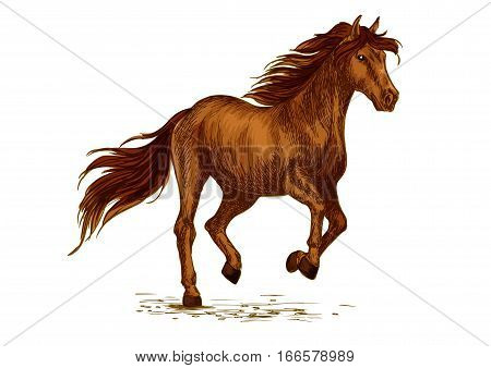 Horse horserace. Brown arabian mustang running or racing in gallop. Wild mare or stallion symbol for equine animal riding sport exhibition, contest or equestrian race club. Vector sketch