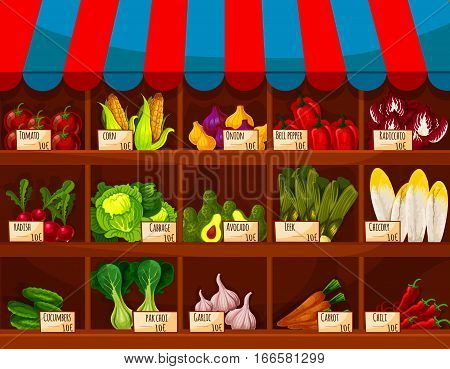Vegetable shop, store stand or market counter showcase with vegetables tomato, corn and onion leek, bell and chili pepper, radicchio, chicory and pak choi leafy salad lettuce, radish, cabbage and avocado, cucumber, garlic and carrot