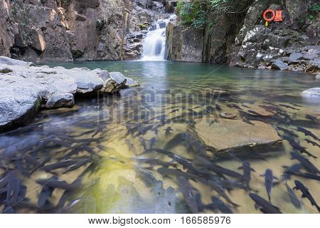 Waterfall in the forest with trough and many fish