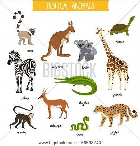 Tropical animals isolated vector illustration. Zebra, monkey, lemur, kangaroo, koala, alligator, antelope, giraffe, jaguar, turtle and snake. Wildlife tropical animals collection. Cartoon animals set. Animals icon collection. Different tropical animals.