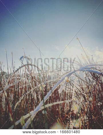 Frozen grass against a backdrop of a blue sky with the morning sun in it