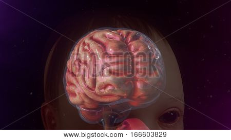 The human brain is the command center for the human nervous system.