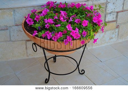 A flower bed with pink flowers on the street on a stand