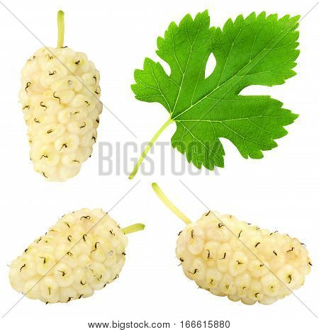 Set of fresh ripe white mulberry berry with leaf isolated on white background. Design element for product label, catalog print, web use.