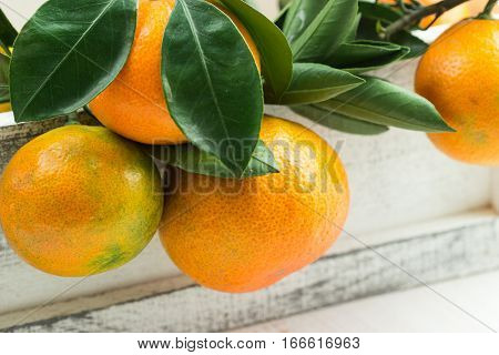 Tangerins In A Wooden Box