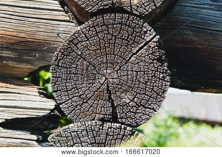 Old dry tree stump. Decayed wooden house