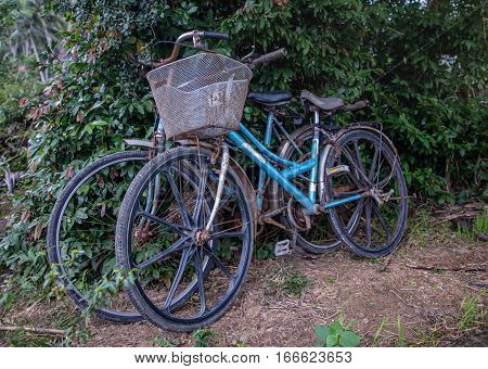 Two old rusty bicycles parked by a bushy hedgerow in Vietnam an still being used daily.