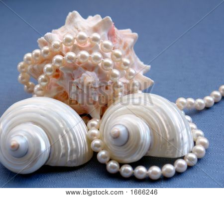 Pearls And Shells