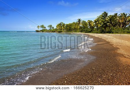Jamaica. Sandy coast of a bay and palm tree