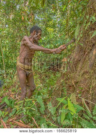 Nomadic Forest Tribe