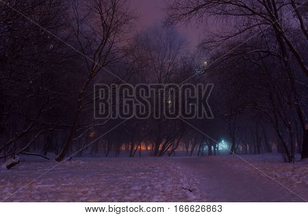Foggy Winter Night In The Park