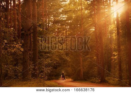 woman walking with a stroller at sunset in the forest with a daughter