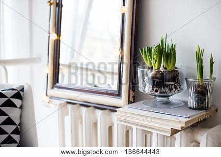 White scandinavian spring interior, hyacinths in a jar closeup, minimalist room decor with daylight