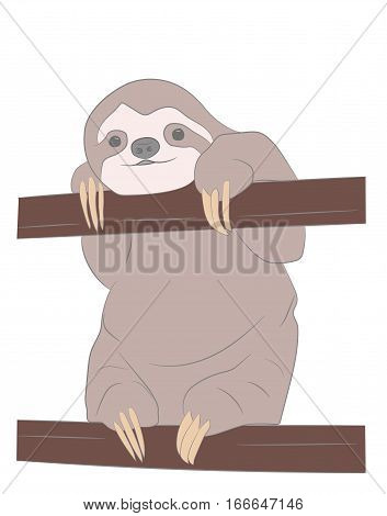 sloth hanging from a branch. vector illustration.