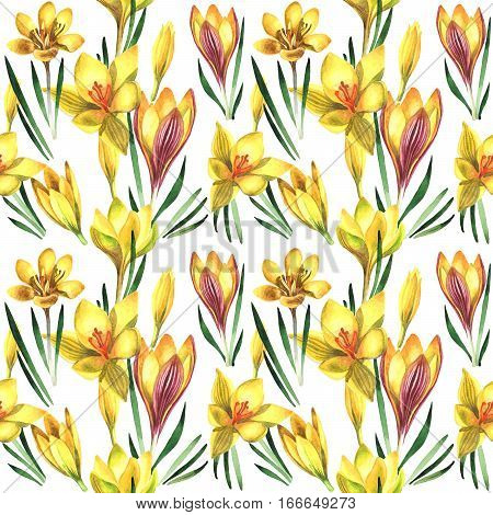 Wildflower rose crocuses pattern in a watercolor style isolated. Full name of the plant: crocuses, saffron. Aquarelle wild flower for background, texture, wrapper pattern, frame or border.