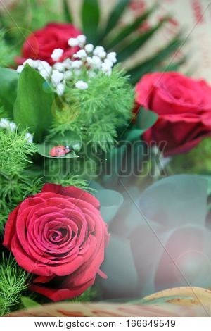card with bouquet of three red roses