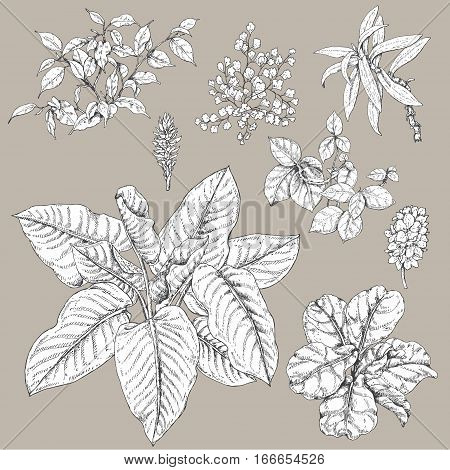 Hand drawn branches and leaves of tropical plants. Black and white floral set isolated on gray background. Ficus dieffenbachia liana fern fronds sketch.