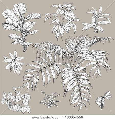 Hand drawn branches and leaves of tropical plants. Black and white floral set isolated on gray background. Ficus palm fronds sketch.