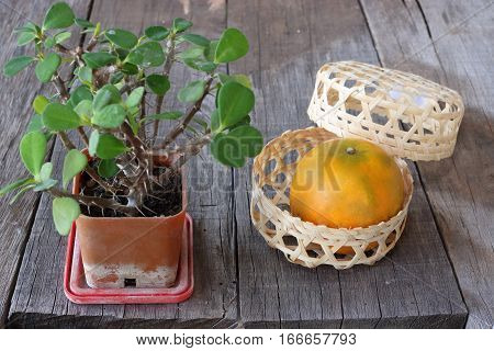 Selective focus on orange in a basket with Crown of thorns or Christ Thorn on old wooden board background. Happy Chinese new year concept.