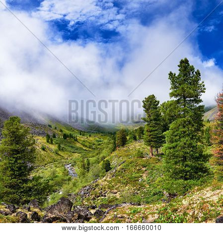 Rising mist over valley of mountain stream. Forest near border of tundra. Eastern Sayan. Siberia. Russia