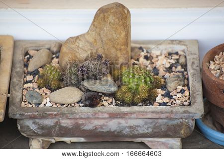 Cactus and succulents collection in small flowerpots