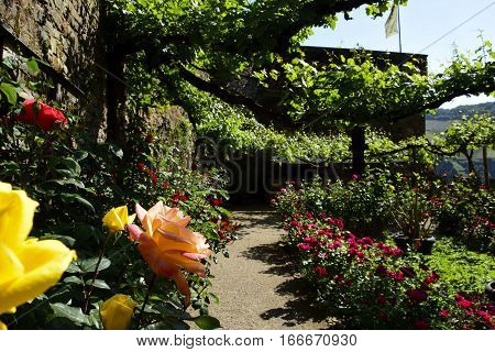 Rose Garden at Castle Rheinstein Germany on a sunny day.